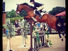 Not To Missed 16hh Showjumper