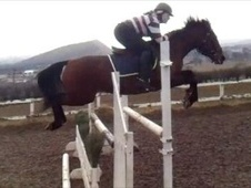 Show Jumpers horse - 7 yrs 4 mths 14.2 hh Bright Bay - West Lothian