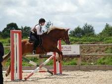 14. 2hh Allrounder For Sale
