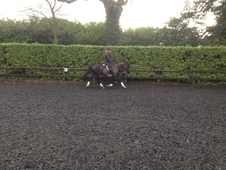 14. 2hh Potential BYRDS/Squad pony, eye catching pony with natura...