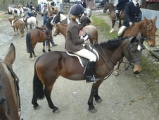 Ruby 13. 2hh 9yo bay Irish mare