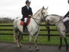 All Rounder horse - 7 yrs 14.2 hh  - Laois
