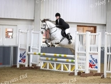 Very Handsome 15. 1hh Grey Allrounder