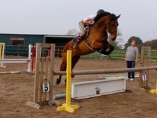 16. 2hh Potential showjumping/eventing mare