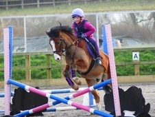 All Rounder horse - 10 yrs 10 mths 13.2 hh Bay - Surrey