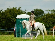 Future Star Pony For Sale But Will Consider Full Loan.