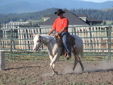 Gorgeous for beginners mare and gelding Horse for sale