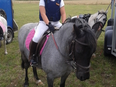 11. 3hh Welsh A Lead Rein / 2nd Pony .