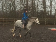 Lead rein 12hh beautiful mare