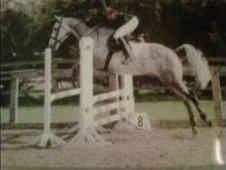 15. 2hh Grey Mare 8 yrs
