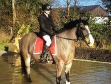 All Rounder horse - 8 yrs 14. 2 hh - Laois