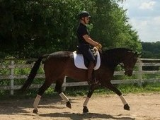 High Score Premium Oldenburg Mare