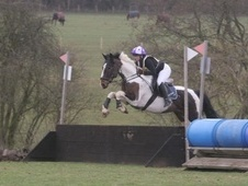 All Rounder horse - 5 yrs 11 mths 16.0 hh Skewbald - Berkshire