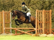 Affiliated Dressage / County Wh / Allrounder