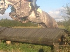 Fantastic Event, Hunt, Team Chasing Prospect 16'2 Dapple Grey Mare