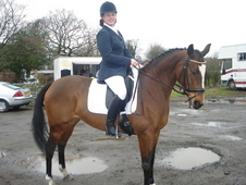 Beautiful 15. 1hh 11yrs Bay Mare Thoroughbred