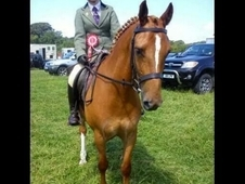 Stunning Show Hunter For Sale
