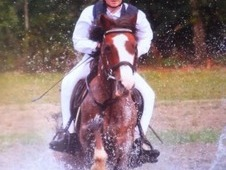 **13. 1hh mare for sale**