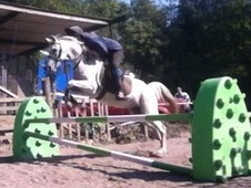 **12. 3hh grey gelding for sale**