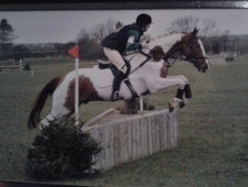 All Rounder horse - 5 yrs 1 mth 16.2 hh Skewbald - Gloucestershire
