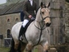 All Rounder horse - 8 yrs 15.1 hh Buckskin - Buckinghamshire