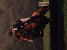 15. 3 Irish Sports Horse, bay, mare. Schoolmistress.