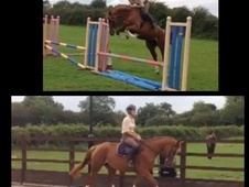 Outstanding 5yr Old Mare