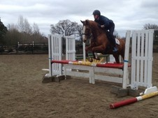 16. 1hh superb all rounder