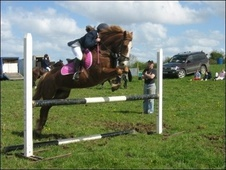 All Rounder horse - 18 yrs 13.2 hh Chestnut - Warwickshire