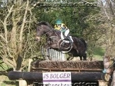 Irish Allrounder for sale