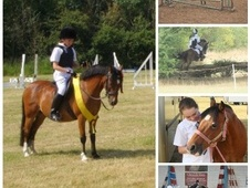 All Rounder horse - 14 yrs 12.2 hh Bay - Essex