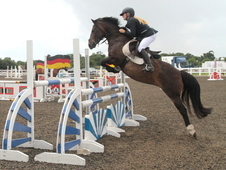 Super 138 Jumping Pony/allrounder