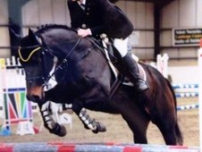 14. 2hh All Rounder Loves Hunting