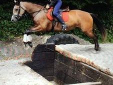 All Rounder horse - 5 yrs 15. 1 hh - Laois