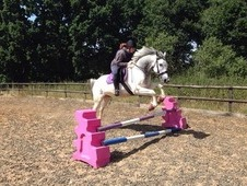 15. 3 pretty blue and white 7yr old mare