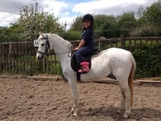 All Rounder horse - 18 yrs 3 mths 12.1 hh Grey - Essex