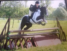 *15hh 8year Old All Rounder Gelding *