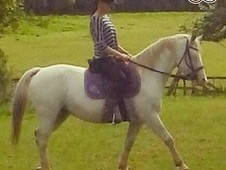 All Rounder Pony For Sale