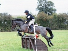 All Rounder horse - 9 yrs 14.1 hh Bay Roan - East Sussex