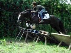 15. 0hh Black Irish Cob All-rounder