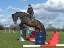 All Rounder horse - 9 yrs 16.2 hh Bay - Gwent