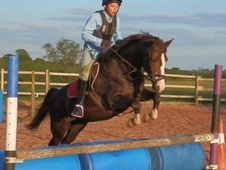 All Rounder horse - 10 yrs 13.2 hh Liver Chestnut - Staffordshire