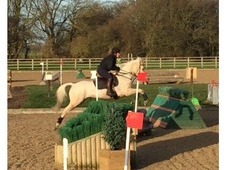 Smart pony club all rounder