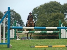 All Rounder horse - 6 yrs 14.3 hh Bay - North Yorkshire