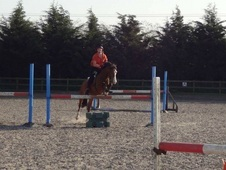 13hh Welsh 7yo Ideal Pony Club