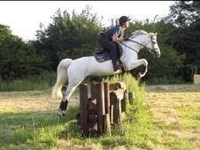 Beautiful 13. 2hh All-rounder/ Pc Pony