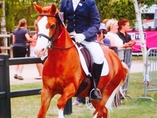13. 2 All Round Competition Pony