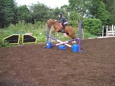 All Rounder horse - 10 yrs 13.1 hh Chestnut - Leicestershire