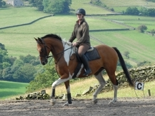 15. 2hh, 6 year old coloured gelding by Bazaar's Chief