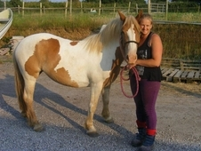 13. 2 Coloured Cob Mare For Sale